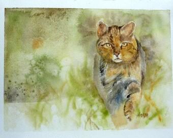 watercolor wild cat