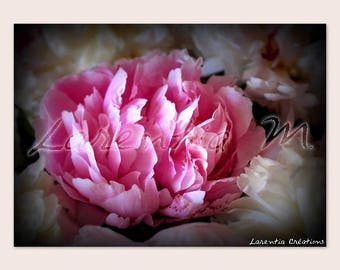 30X40cm picture close up of a Peony pink