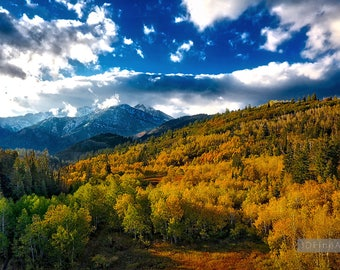 Fall Mountain Colors, Fall Colors, Golden Aspen Trees, Fall Photography, Home Decor, Office Decor, Wasatch, Landscape Photography
