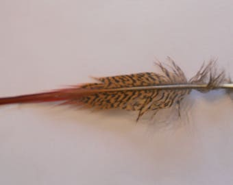 Wonderful feather natural pheasant measuring 25cm in length.