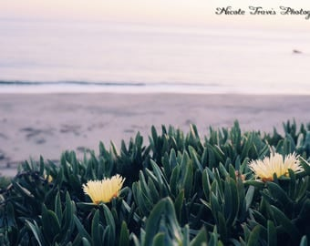 Beach Flowers Downloadable Photograph