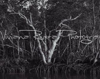 Everglades National Park_Oyster Keys_Mangroves_Trees_Early Morning_Water_Nature Photography_Fishing_Black & White_Prints