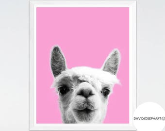 Alpaca Print, Alpaca Photo, Animal Print, Nursery Print, Woodlands Nursery, Digital Download,Modern Print, Alpaca Wall Art, Pink Print