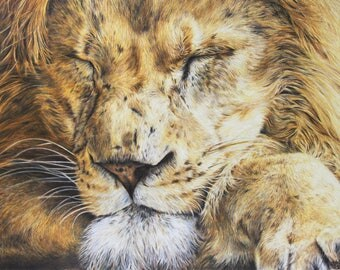 Lion print, limited edition, hand signed fine art giclee print - 'Sleeping Lion'