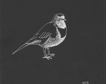 Wagtail grey drawing on black paper