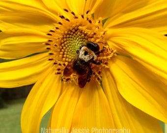 The Sunflower and the Bee