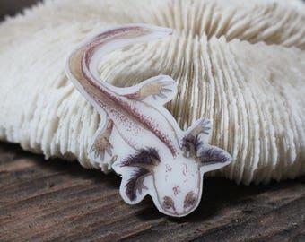 Salamander Baby Magnet