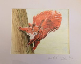 Squirrel Painting. **LIMITED ADDITION** signed print of 'Well Red'. Squirrel gift. Wildlife art.