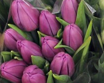 FRESH Tulips, Tulip Bunch, Tulip Flowers, Spring Flowers, Flowers for your Table, Real Flowers, Easter Flowers, White Tulips, Red Tulips