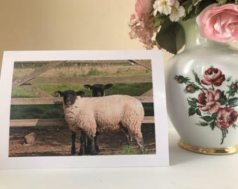 Sheep photo greetings card