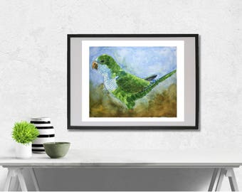 Monk Parakeet watercolor painting