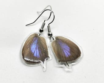 Real Butterfly Wing Earrings (Shiny Blue)