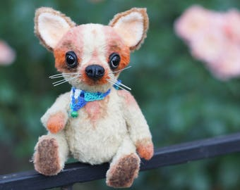 The teddy dog of a chihuahua