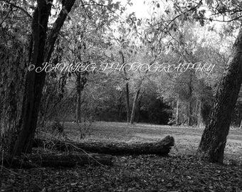 8x10 Print of Woods In B&W