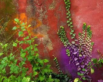 Purple Ivy , art print.