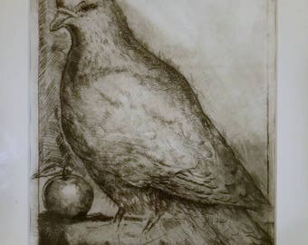Pigeon with apple. Dry point etching.