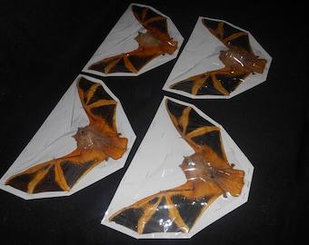 Taxidermy Bat Kerivoula Picta Painted