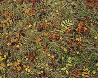 Autumn in color