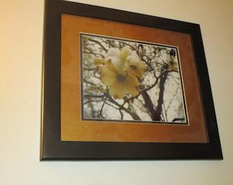 Framed Photograph #1005, Home Decor, Wall Art, Winter, Nature, Snow