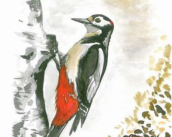 Major, original watercolor painting, paper A4