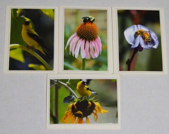 The Birds & The Bees  - 4 Fine Art Handmade Photo Greeting Cards, Birds and Bees Handmade Photo Notecards, Birds and Bees Stationary