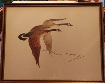 Charles E. Murphy Canadian Geese