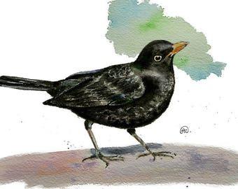 Cute blackbird Bird art watercolor print