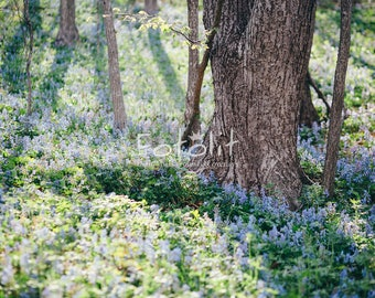 Spring digital backdrop, meadow background, summer background, flowers background, spring background, forest backdrop, tree background