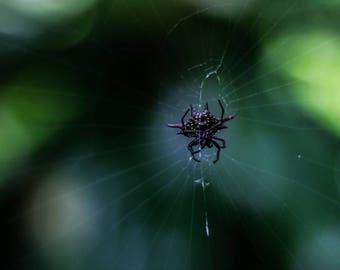 Spider on a Web - Digital - Photograhobby