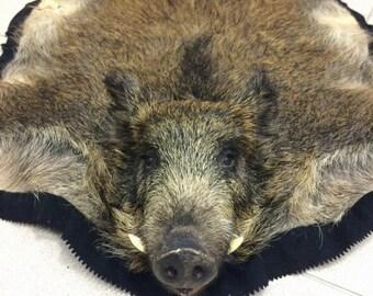 Skin of american boar