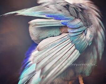 Parrotlet bird photography feathers fine art photography wall art fairytale