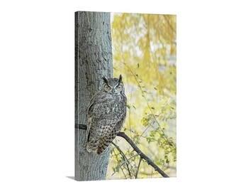 Owl Wall Art, Autumn Art, Owl Photography, Owl Print, Picture Gift, Avian Art, Great Horned Owl, Wildlife Photograph, Fall Photo, Canvas Art