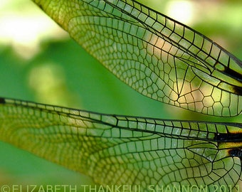 Dragonfly Wings Photo - fine art photograph - 8 x 10 - 5 x 7 - yoga - archival paper print - nature - art - home decor - macro - troppobella