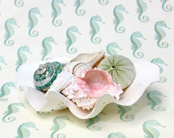 Beach Decor - Large Natural Clam Shell - coastal nautical shells seashells sea shells