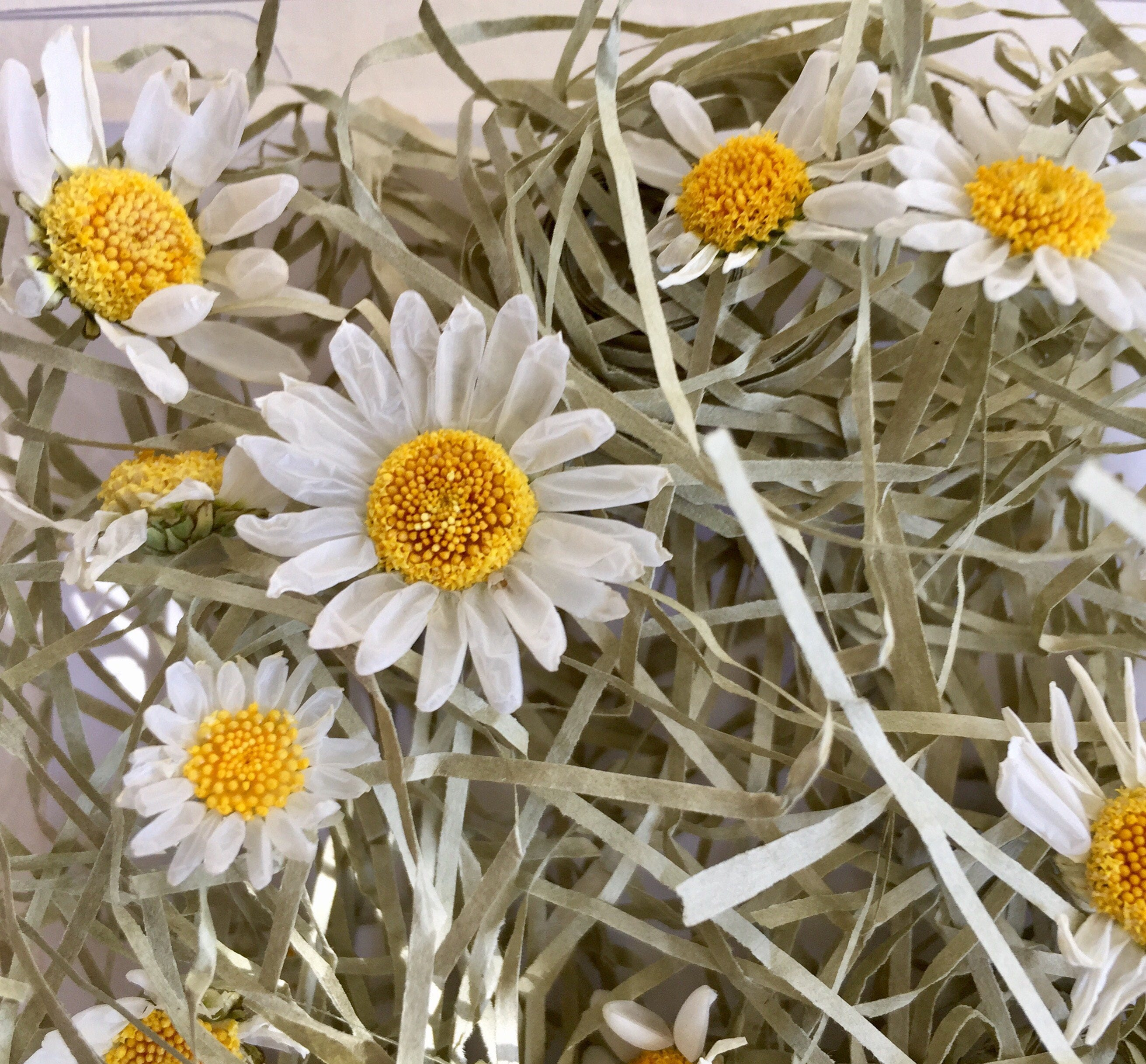 12 small white daisies dried flowers wedding confetti for Dried flowers craft supplies