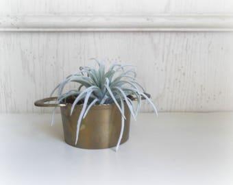 Boho Brass Planter, Succulent Pot, Small Brass Bowl, Jungalow Decor, Mid Century Modern Brass