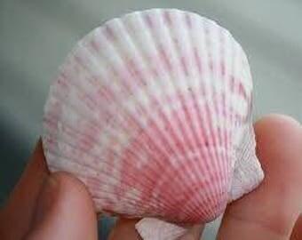 Wedding Headpiece - Custom Wedding Hair Comb - Sea Shell Hair Comb -