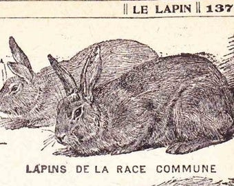 Antique French Print Dictionary Page 1920s Engraved iIlustrations rabbits bunny bunnies lapin