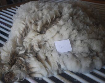 CVM Romeldale White raw fleece