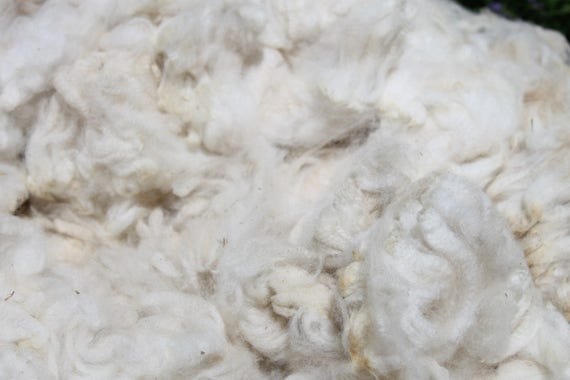 "Alpaca Fleece- White- ( Pri) Great for Dyeing, Spinning, Felting Nice crimp- little VM - Little to No Guard Hair 3-3.5"" Staple - 2.9 pounds"