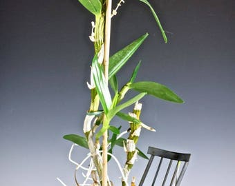Delightful Wrought or Rod IRON ROCKING CHAIR Potted Plant Holder, circa 1930's - 1940's
