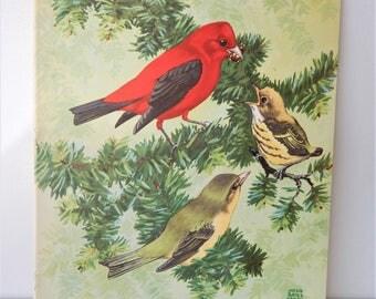 Vintage Book Print ~ Tanager Bird Family ~ Childrens Bird Illustration ~ Room Decor ~ Vintage Nature Art