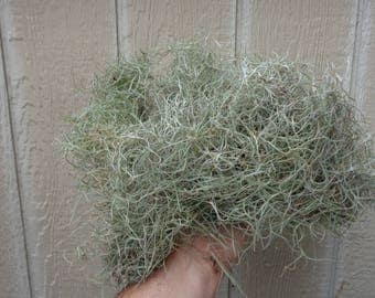 75% OFF XL Spanish Moss Clump Tillandsia Usneoides SALE As Is