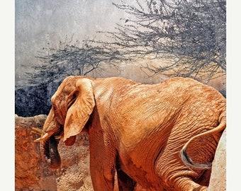 On Sale Asian Elephant, Zoo Atlanta, Nursery Art