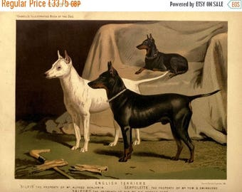SALE ENGLISH TERRIER Dogs Antique Chromolithograph Dog Print 1881 Vero Shaw Cassells and Company Christmas Thanksgiving illustration plate g