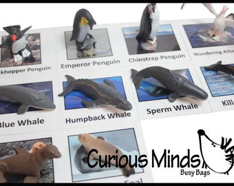 Antarctica Animal Match - Antarctic animals for Montessori learning continent toys