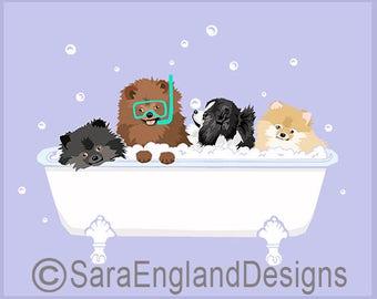 Spa Day - Pomeranian