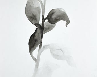 plant study no. 15 . original ink painting