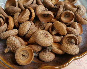50 Real Acorn Caps|Wild Harvested|Nature Supplies|Autumn Home Decor|Fall Equinox|Alter Supplies|Waldorf Acorn Caps|Hedge Witch Magic Supply