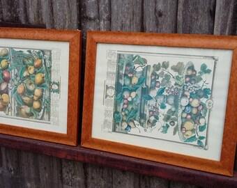 Pair of Glazed Walnut Veneered Frames